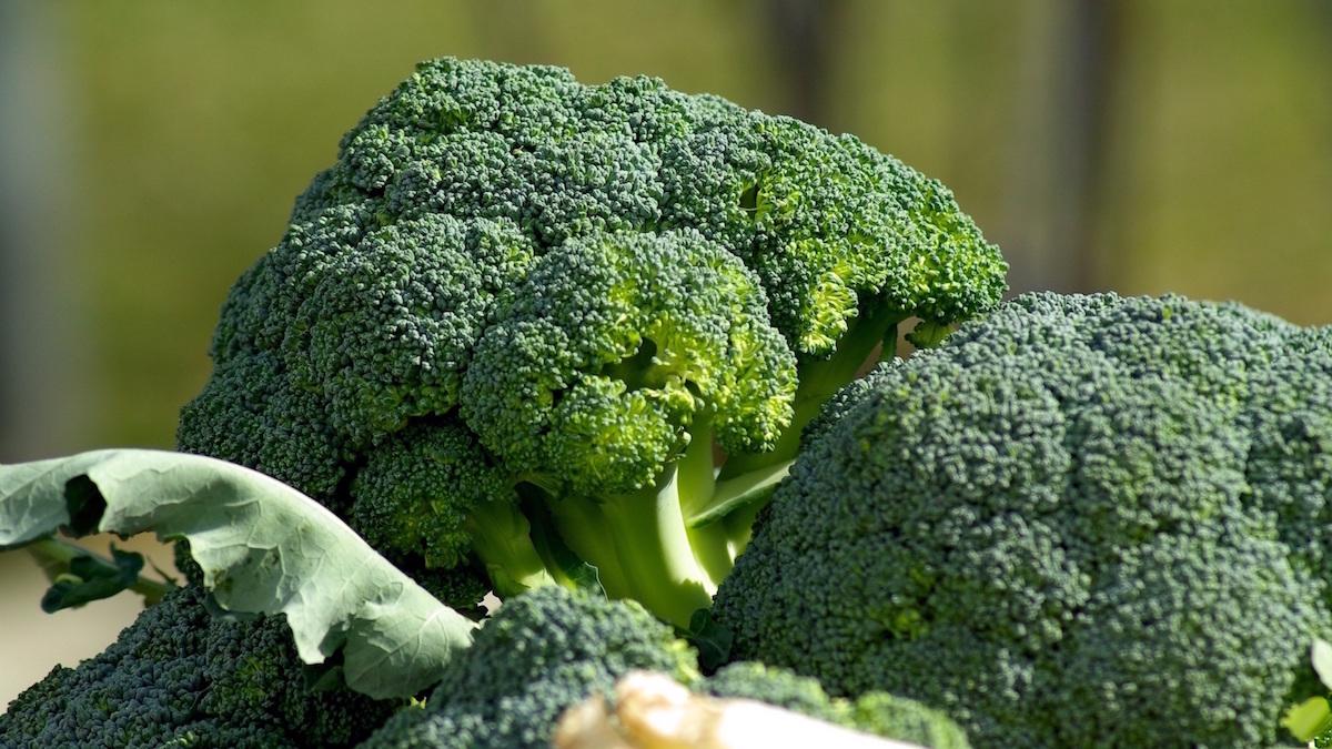 broccoli-fresco